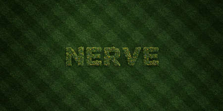 nerve message: NERVE - fresh Grass letters with flowers and dandelions - 3D rendered royalty free stock image. Can be used for online banner ads and direct mailers. Stock Photo