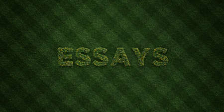 essays: ESSAYS - fresh Grass letters with flowers and dandelions - 3D rendered royalty free stock image. Can be used for online banner ads and direct mailers. Stock Photo