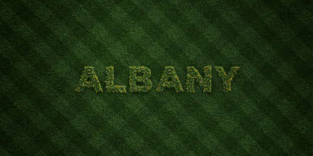 albany: ALBANY - fresh Grass letters with flowers and dandelions - 3D rendered royalty free stock image. Can be used for online banner ads and direct mailers.