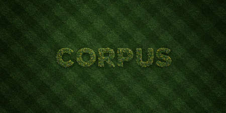 corpus: CORPUS - fresh Grass letters with flowers and dandelions - 3D rendered royalty free stock image. Can be used for online banner ads and direct mailers.