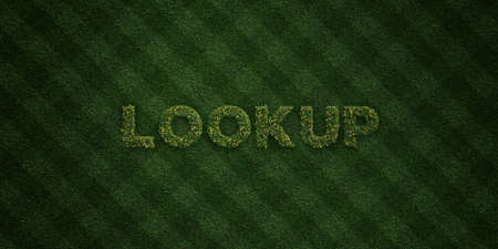 lookup: LOOKUP - fresh Grass letters with flowers and dandelions - 3D rendered royalty free stock image. Can be used for online banner ads and direct mailers. Stock Photo