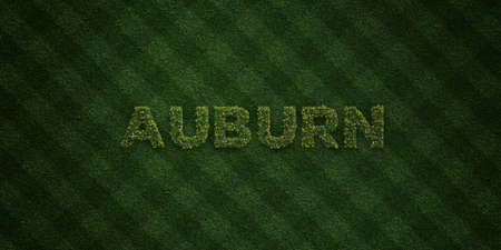 auburn: AUBURN - fresh Grass letters with flowers and dandelions - 3D rendered royalty free stock image. Can be used for online banner ads and direct mailers.