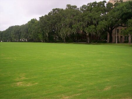 Wide stretch of green field in Savannah Banco de Imagens - 741199