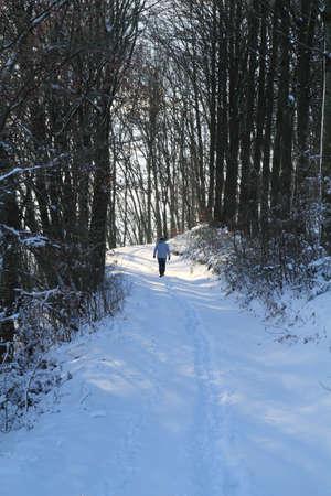 Spaziergang durch einem Winterwald Standard-Bild - 30675724