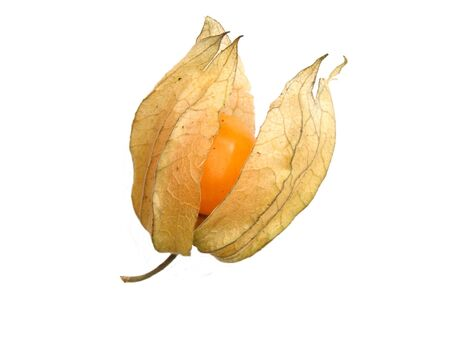 alkekengi: Physalis alkekengi  Bladder cherry, Chinese lantern