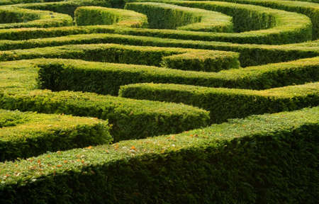Complex hedge maze Stock Photo