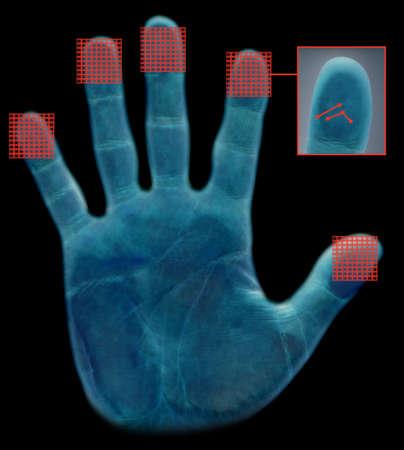 Biometric fingerprint scanning screen