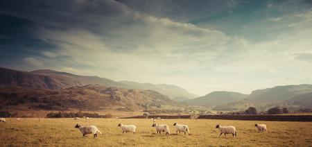 lake district: A sheep farm in the Lake District, UK Stock Photo