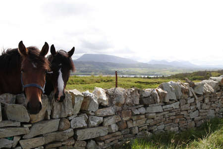 Horses in the Irish Countryside of Donegal photo
