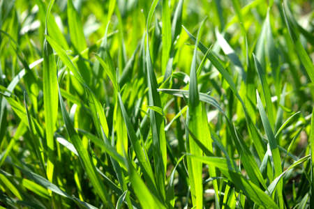 enchant: Close up of blades of grass in a green field