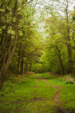 beautiful woodland: Beautiful English woodland scene with light coming though the trees.
