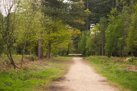 though: Beautiful English woodland scene with light coming though the trees.