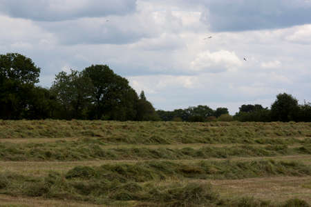 Country side taken from around Holmer Green, Buckinghamshire, England Stock Photo
