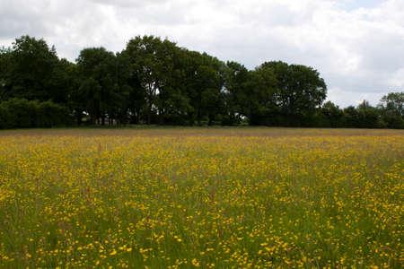 Meadow and fields around Holmer Green, Buckinghamshire, England Stock Photo