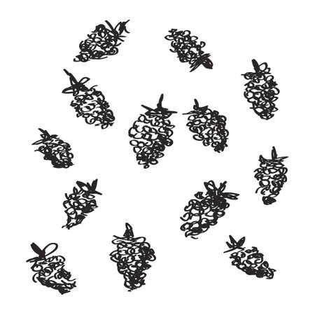 raspberries: Simple hand drawn doodle of some raspberries