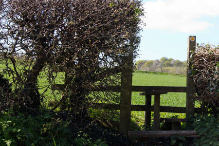 stile: Wooden country stile in a hedge leading to field
