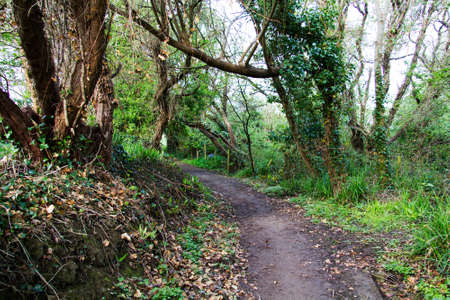 cornwall: View along a country path in Bude, Cornwall