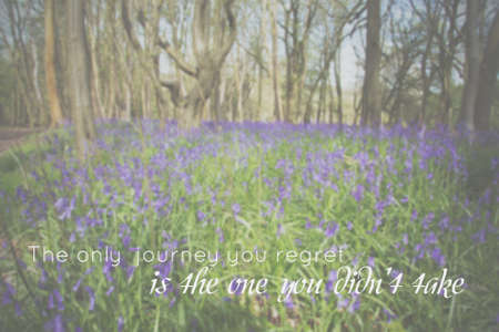 bluebell woods: Inspirational life message on a blurred background Stock Photo