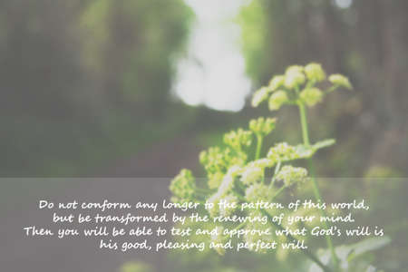 bible flower: Inspirational verse from the bible on a blurred background