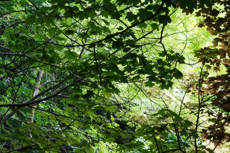 view through: View through English woodland in the summer