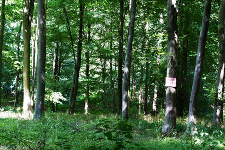 shinning light: Woods in summer with light shinning through green leaves Stock Photo