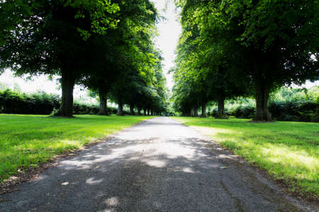 both sides: Path surrounded by green trees on both sides