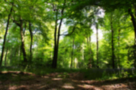beautiful woodland: Beautiful English woodland on a spring morning Out of focus. Stock Photo