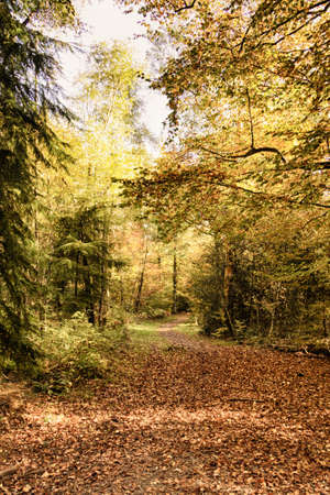 definicion: Woodland scene with autumn leaves in yellow and brown Foto de archivo