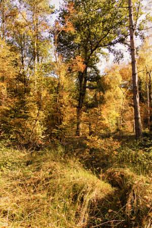 Woodland scene with autumn leaves in yellow and brown HDR Filter. Stock Photo