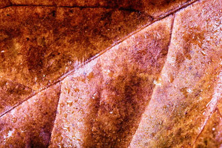 them: Close up of frozen autumn leaves with ice on them HDR Filter. Stock Photo