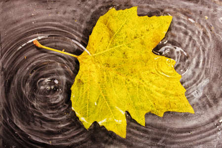 Bright colourful autumn leaf floating in water with ripples HDR Filter.