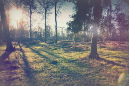 Low sun through trees in english woods Stock Photo