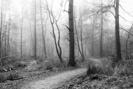 English woodland on a foggy misty January morning