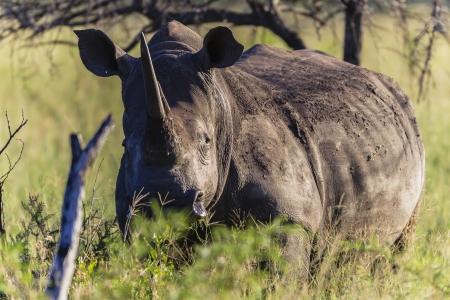 kz: Mziki Private Reserve -Phinda - Animal Wildlife Zululand KZN South Africa