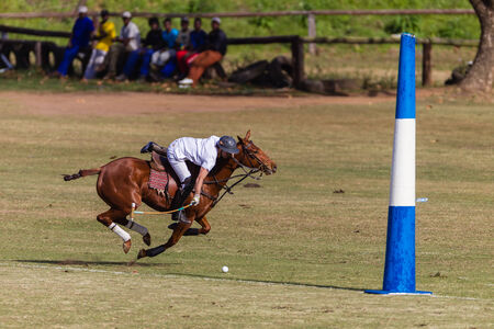 Equestrian Polo pony player plays hits ball at goals at speed