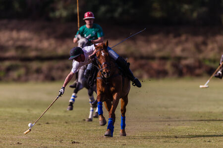 Equestrian Polo pony player plays hits ball at speed