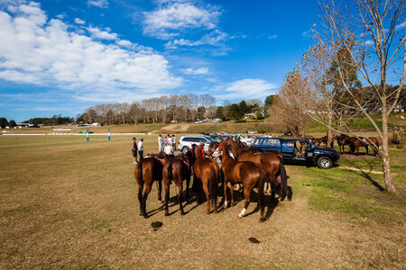 Polo Field horses ponies grouped together on fine day before game play starts