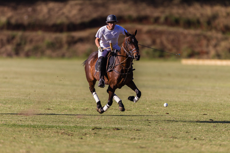 Equestrian Polo pony player gallops with ball at goals at speed