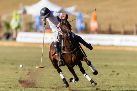 Equestrian Polo pony player stops pony mid air plays hits ball at goals at speed