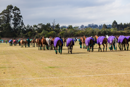 Equestrian polo international match horse ponies parade Chile plays South-Africa photo