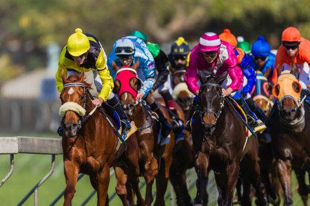bieżnia: Konie wyścigowe dżokej s w kolorach skupione na reling koncentrując się na wygraną