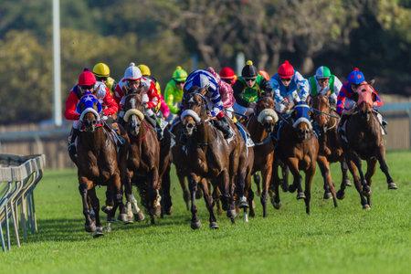 bunched: Race Horses fantino s in colori raggruppato insieme sulla ringhiera concentrandosi sul vincente