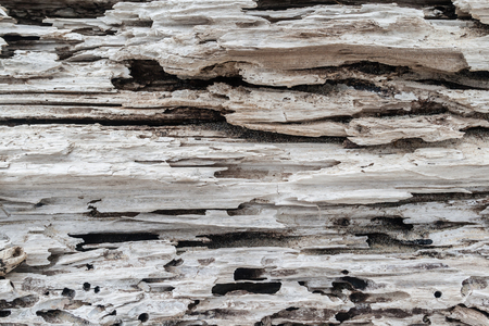 rotting: Rotting Tree log decays in natures weather with textures, grooves and shapes on beach sands Stock Photo