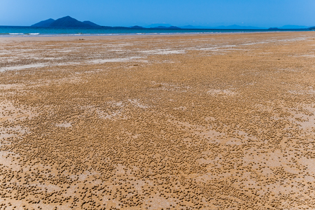 Ocean Tropical Beach thousands of small crap made sand-balls scattered over the low tide marine landscape
