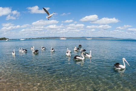 Pelican birds in blue estuary lagoon scenic landscape photo
