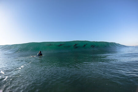 swell: Ocean Dolphins Encounter  surfer face to face surfing wave swell before crashing onto shallow reef
