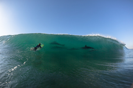 encounter: Ocean Dolphins Encounter  surfer face to face surfing wave swell before crashing onto shallow reef