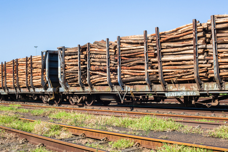 Train truck trailers stacked with tree wood poles timber for paper pulp industry
