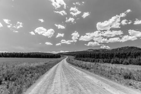 contrasts: Dirt Road travels through forest tree plantations into the distant horizon in black white abstract contrasts with sky and cloud puffs Stock Photo