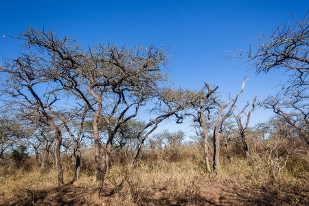 rugged terrain: Wildlife animals in their habit wilderness reserves in herds over the rugged terrain